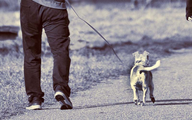 Kto powinien sprzątać po psie?